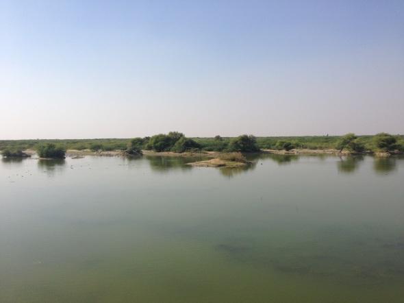 Lago sacro para os bishnois